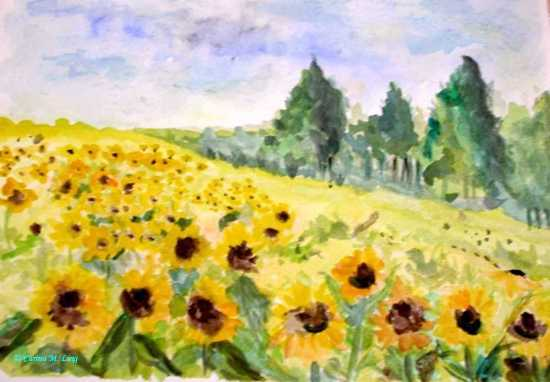 Carina M. Ling - Sonnenblumenfeld
