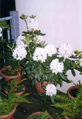 Für Carina ist das ein Philodendron ...